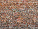 "Columbus-Red Brick Wall-2011 41.5""x31.5"""